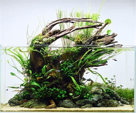 aquascapes online 25 best ideas about aquascaping on pinterest aquarium aquarium aquascape and