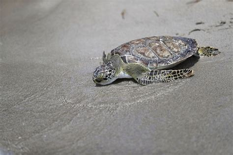 Day 5 Turtles by These 5 Turtles Being Helped Back Into The Will Make