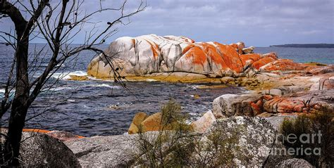 Australian Home Decor Blogs by Elephant Rock Bay Of Fires Photograph By Lexa Harpell