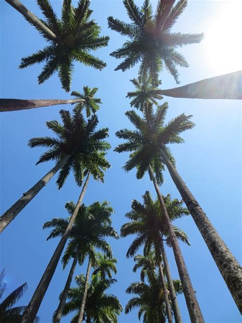 images of trees palm trees sky 183 free photo on pixabay