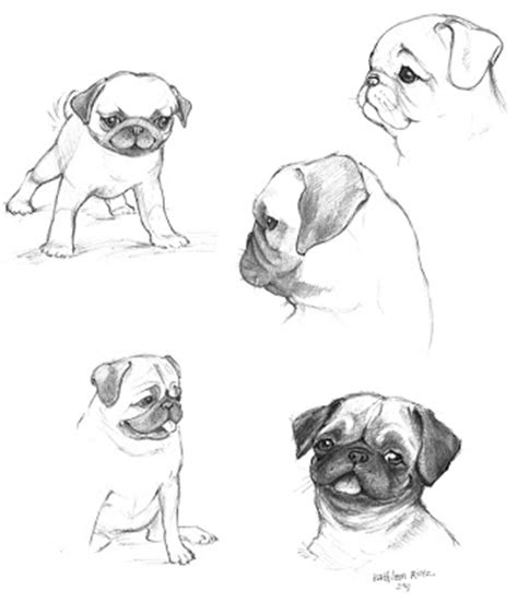 how to pug how to draw color pugs