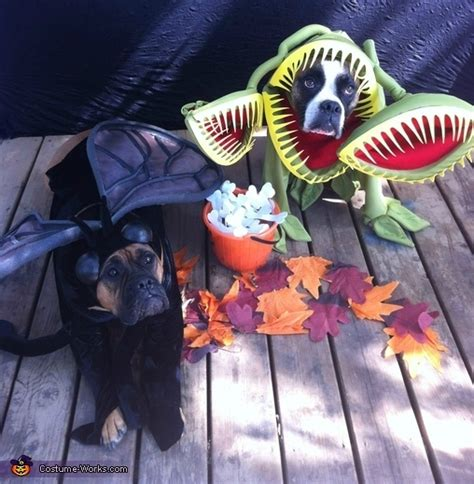 venus fly trap  fly dog costumes pictures