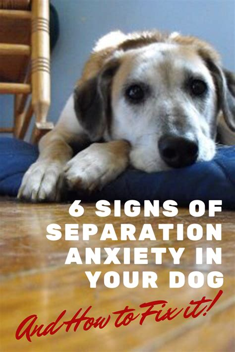 puppy has separation anxiety 6 danger signs your has separation anxiety doggies