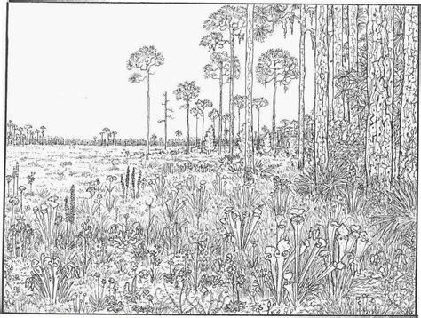 forest animals coloring pages for adults detailed animal coloring pages for adults coloring page