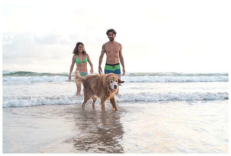 golden retriever costa rica in guanacaste playa ventanas costa rica golden hour photos