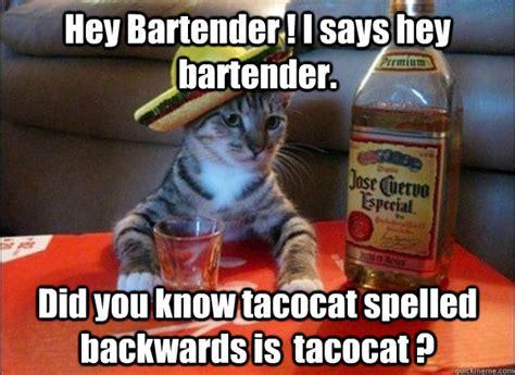 Funny Bartender Memes - hey bartender i says hey bartender did you know tacocat