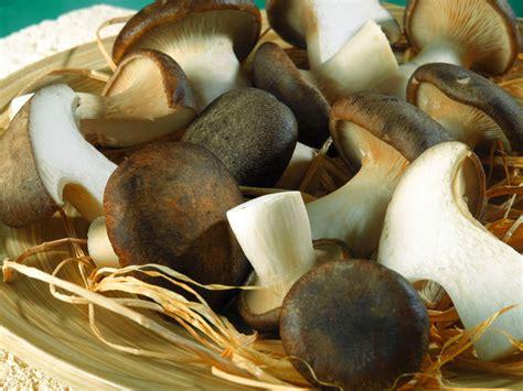 come cucinare i funghi cardoncelli ricette con funghi cardoncelli