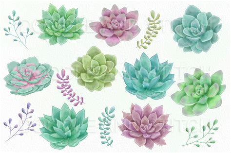 succulent clip watercolor succulent clipart illustrations by doodle