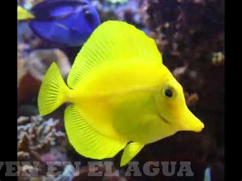 imagenes de animales invertebrados acuaticos animales vertebrados e invertebrados youtube
