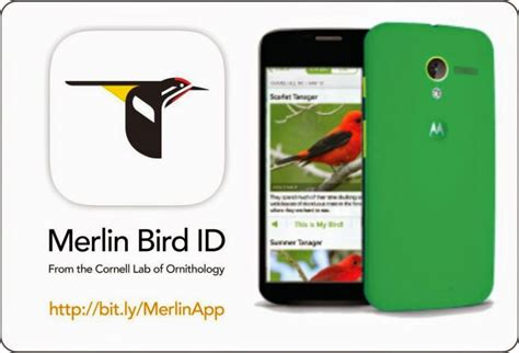 identify that bird with the merlin bird id app actionhub