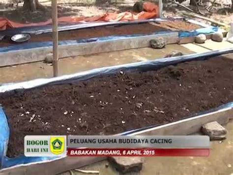 Cacing Bogor bogor hari ini april 2015 peluang usaha budidaya cacing