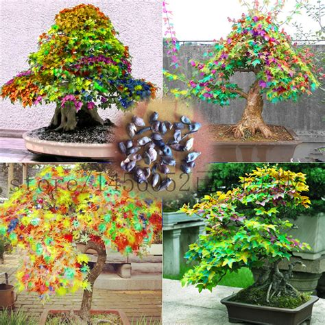 trees for sale cheap wholesale trees for sale 28 images china fatory
