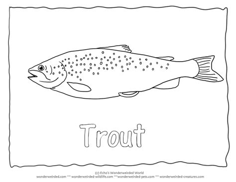 trout fish coloring pages common trout picture to color 3 brown trout coloring page