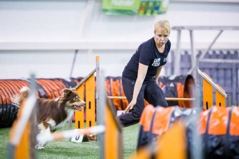 one mind dogs method gains success in america
