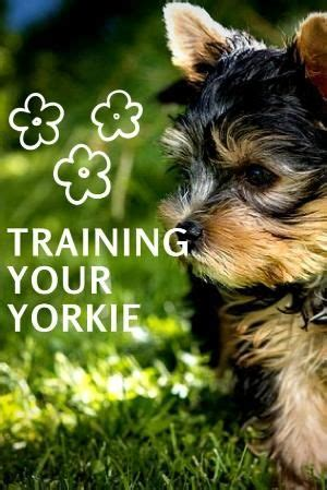 pattern making courses yorkshire 26 best yorkshire terrier images on pinterest doggies