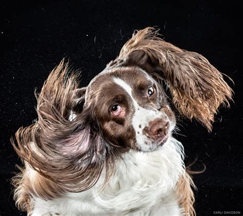 dogs shaking you ve never seen dogs shake like this before huffpost