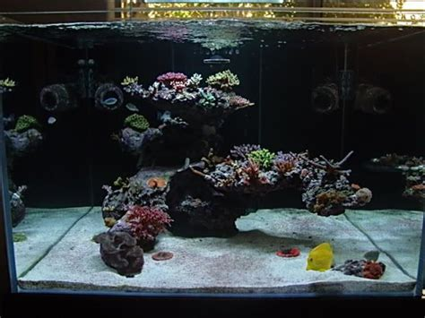 live rock aquascaping ideas 52 best images about aquascaping on pinterest