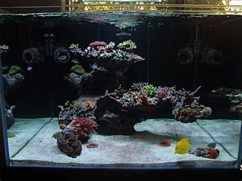 marine aquarium aquascaping 52 best images about aquascaping on pinterest