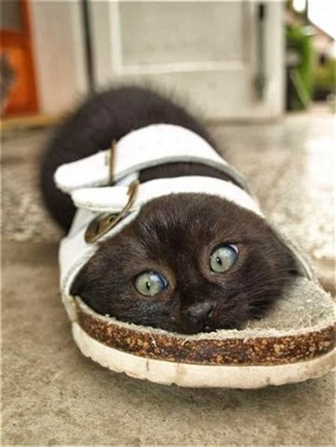 funny cat in shoes crazy lazy silly and strange