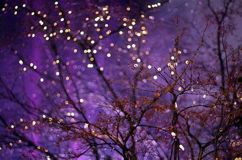 branches color colour glitter lights purple image