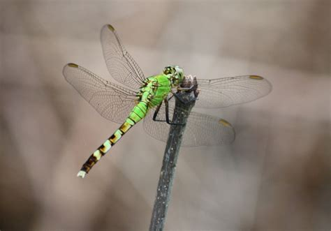murmuring trees dragonfly summer