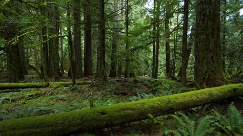 wallpaper 4k forest ultra hd 3840x2160 wallpaper wallpapersafari