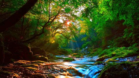 Landscape Definition Computer Beautiful Mountainous River Forest With Green