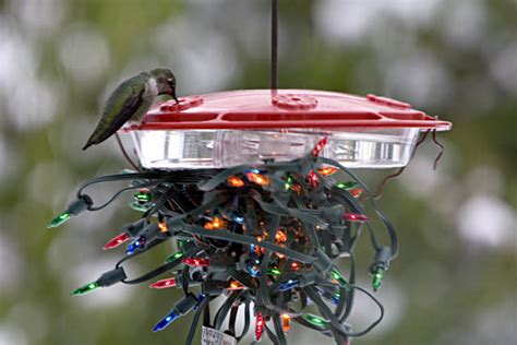hummingbirds in your winter garden landscape design in a day