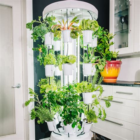 nutritower  plant vertical hydroponic indoor gardening