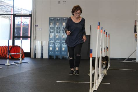 zoom room redondo agility league chion becomes a therapy zoom room