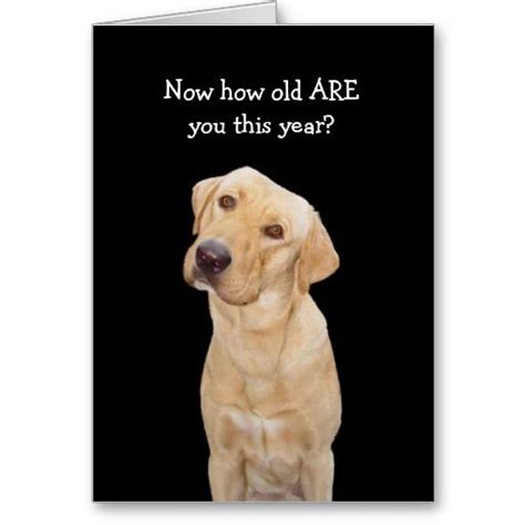 Gift Card Lab - 17 best images about funny pet greeting cards on pinterest birthday greeting card