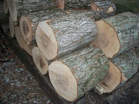 maple tree wood comparing less common types of firewood firewood