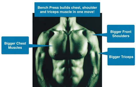 bench every day bench press every day 100 images the best damn bench