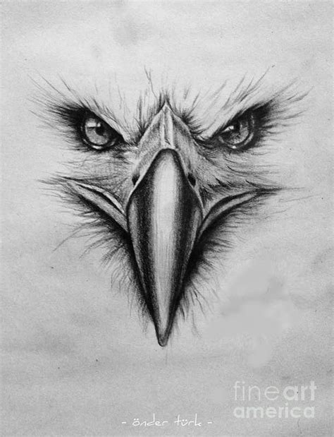 front view grch pinterest eagle drawing front view pictures to pin on pinterest