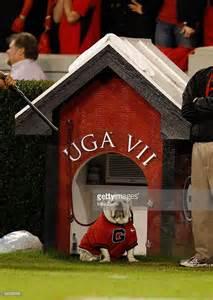 English bulldog who served as the university s football team mascot