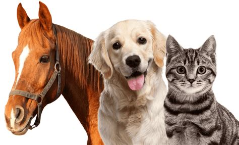 puppy cat dogs cats and horses we them all viral diply
