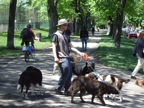 Looks For Your Pet Isnt Walking Season by Walker Salary What Can You Make Careers With Animals