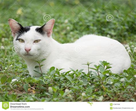 white with black spots white cat with black spots cats
