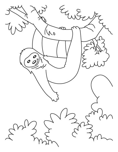 free coloring pages of three toed sloth