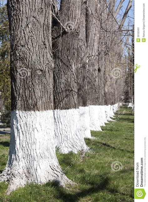 white wsahed base  tree trunks clipart clipground