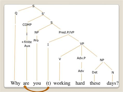 question tree diagram tree diagrams wh question
