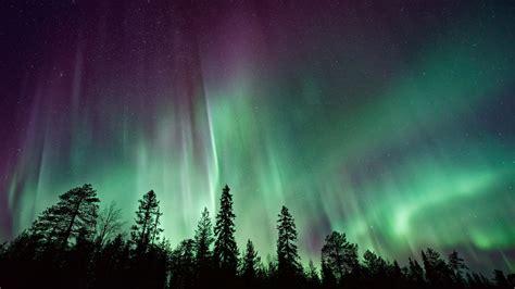 wallpaper northern lights forest aurora borealis 4k 8k