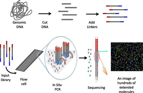 illumina sequencing price massively parallel sequencing the new frontier of