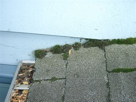 why is there moss on my roof why do i moss on my roof border home and property