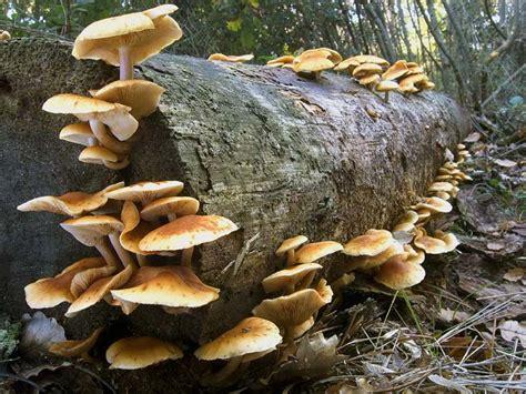 fiori acquatici nomi un tesserino per raccogliere i funghi la decisione di