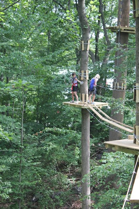 discovery swing tree cool finds where your inner tarzan swings into action