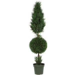 5 foot cypress ball and cone topiary potted 5168