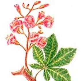 assunzione fiori di bach fiori di bach in gravidanza walnut e le altre lifegate