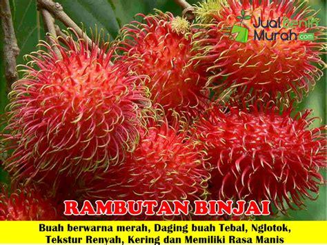 Bibit Buah Rambutan Unggul bibit buah unggulan hp 085707858020 jual bibit buah
