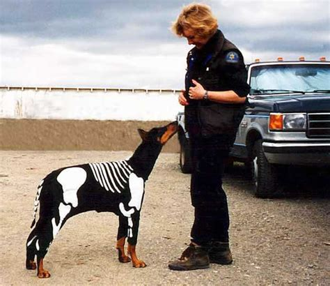 cadaver dogs photoalbum